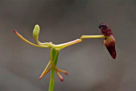 Virágok, amelyek egészen másnak néznek ki