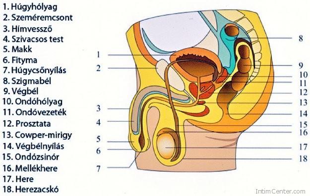 hosszabbítók a péniszen egy vibrátorral pénisz és erogén
