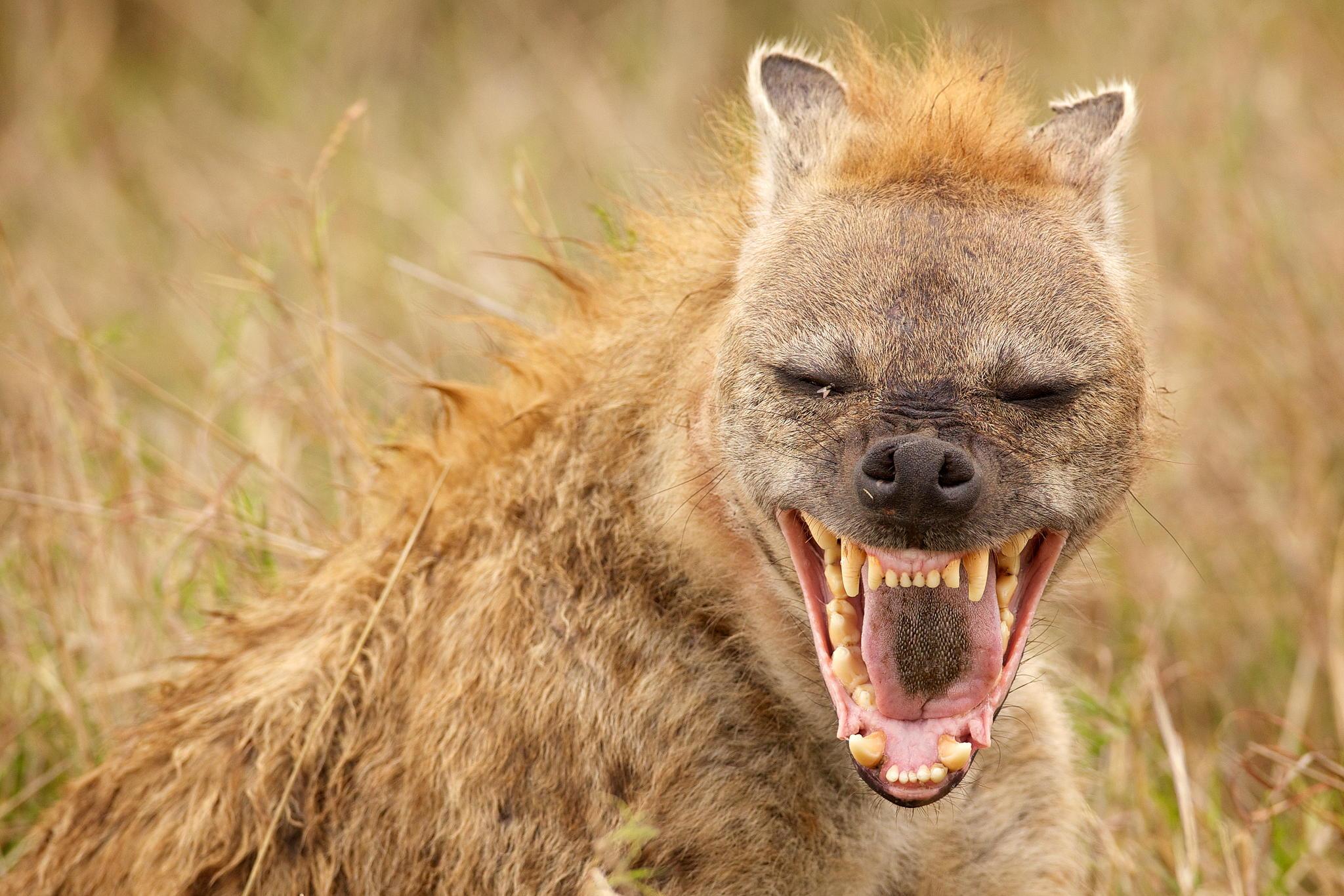 A tíz legfurcsább párzás az állatvilágban