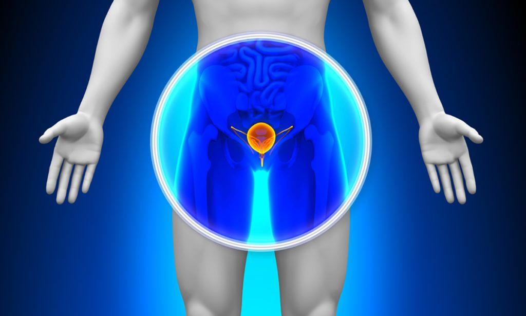 pénisz kerülete az erekció során egy férfi péniszét nyugalomban