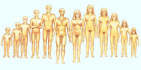 Hét érdekes tény a női mellről - Dívány