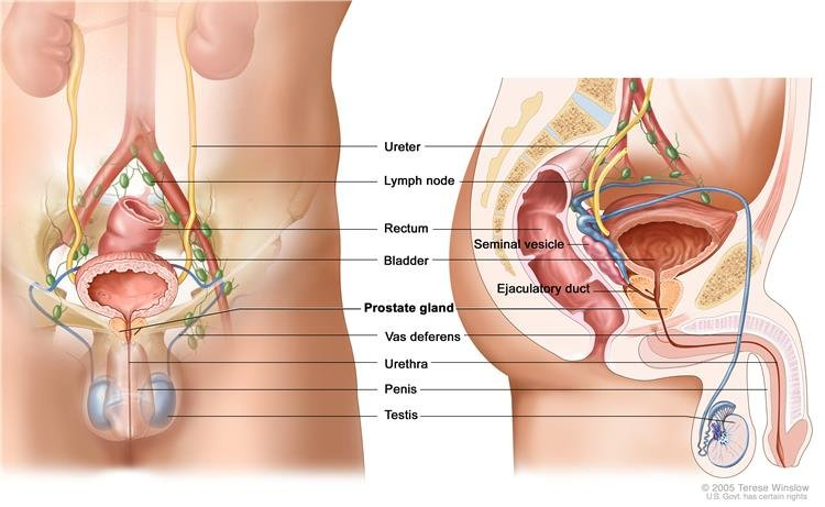 a nemi betegségek befolyásolják-e az erekciót