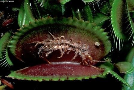 növények pénisz formájában amint felébredek a merevedés eltűnik