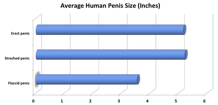 Minden, ami méret: Elképesztő tények a férfiasságról - Ripost
