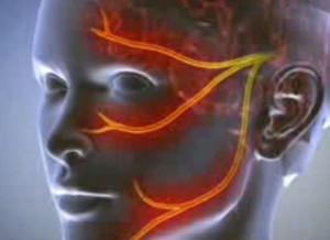 zárt fej az erekció során